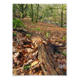Autumnal Log Photographic Print