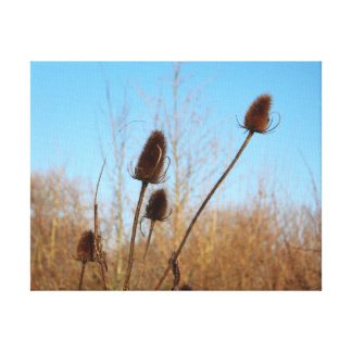 Autumnal Teasel Thin Frame Canvas Print
