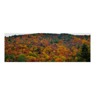 Autumnal Treetops Poster