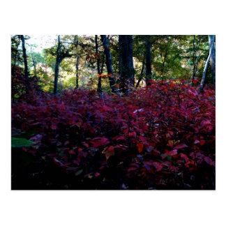 Autumnal Underworld Postcard