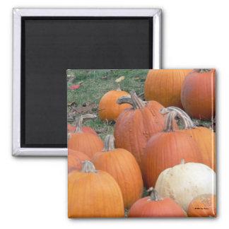 Autumn's Bounty 3 Magnet