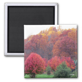 Autumn's Glory Magnet