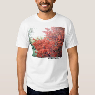 Autumn's Glowing Leaves Tee Shirt