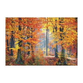 Autumn's Gorgeous Leaves