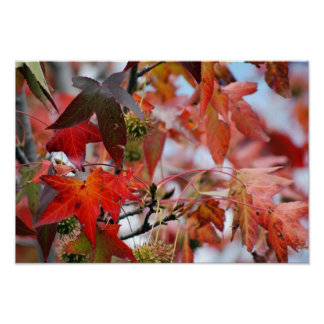 Autumns maple leaves gift poster