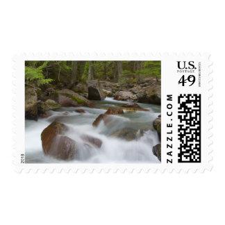 Avalanche Creek in Glacier National Park in Postage Stamp