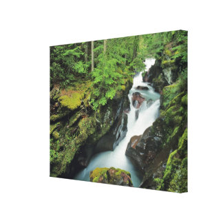 Avalanche Gorge in Glacier National Park in Canvas Print