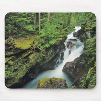 Avalanche Gorge in Glacier National Park in Mouse Pad