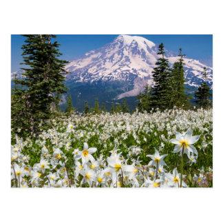 Avalanche lilies and Mount Rainier 2 Postcard