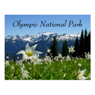 Avalanche Lilies Olympic National Park Postcard