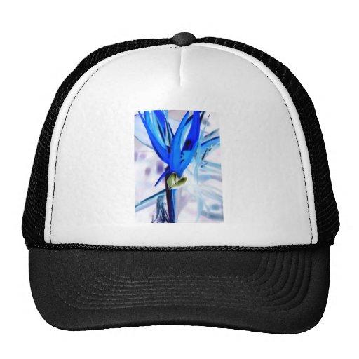 Ave del paraíso azul gorra