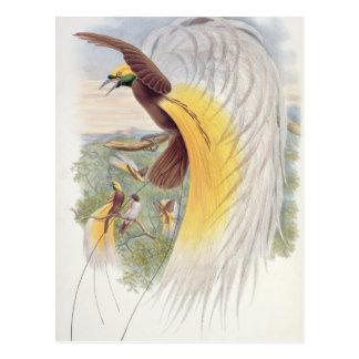 Ave del paraíso de pájaros de New Guinea Postal