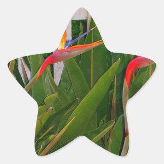 Ave del paraíso pegatina en forma de estrella