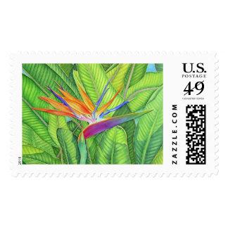 Ave del paraíso timbres postales