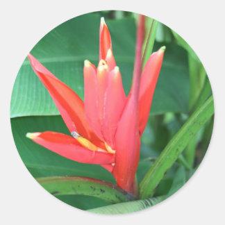 Ave del paraíso tropical de la flor pegatina redonda