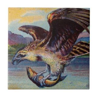 Ave rapaz de vuelo con los pescados azulejo cuadrado pequeño