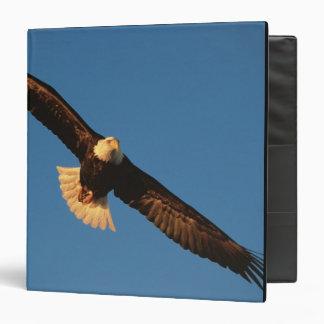 "Ave rapaz, Eagle calvo en vuelo, Kachemak Carpeta 1 1/2"""