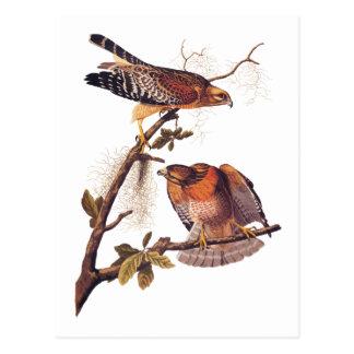 Ave rapaz llevada a hombros roja de Audubon del Tarjetas Postales