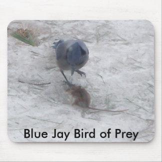 Ave rapaz, pájaro del arrendajo azul del arrendajo tapete de raton