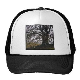 Avebury Beech Trucker Hats