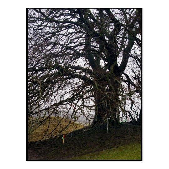 Avebury Beech Postcard