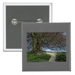 Avebury, Wiltshire, England. Tree and path. Pin