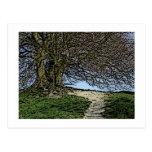 Avebury, Wiltshire, England. Tree and path. Postcard