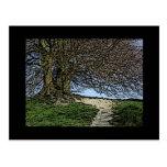 Avebury, Wiltshire, England. Tree and path. Post Card