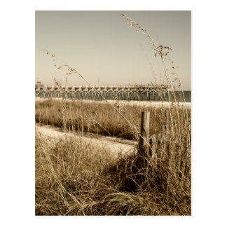 Avena del mar en las dunas en Myrtle Beach Postal