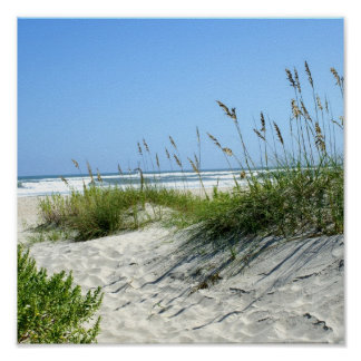 Avena del mar en Ocracoke Impresiones