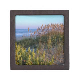 Avena y playa del mar caja de joyas de calidad