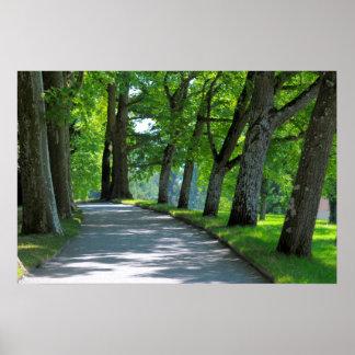Avenida de árbol, isla Mainau, Póster