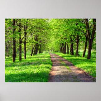 avenida de la primavera póster