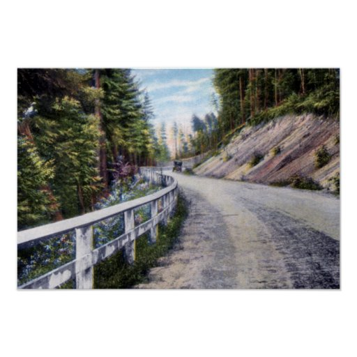 Avenida de las maderas de pino de Chestertown Nuev Impresiones