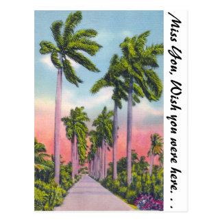 Avenida de palmas reales majestuosas en la Florida Postal