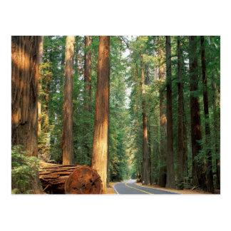 Avenida del Giants, Humboldt, CA Tarjetas Postales