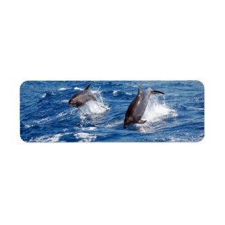 Aventura del delfín etiquetas de remite