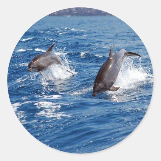 Aventura del delfín pegatina redonda