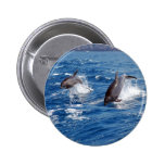 Aventura del delfín pin