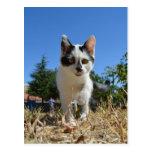 Aventura del gato del gatito tarjeta postal