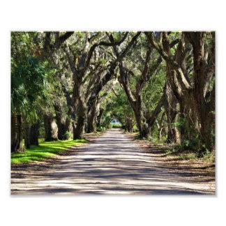 Avenue of Oaks Photo Print