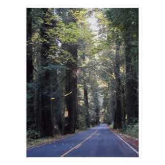 Avenue of the Giants- Humboldt Redwoods State Park Poster