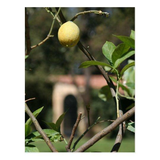 avere sapore il limoncello postcard