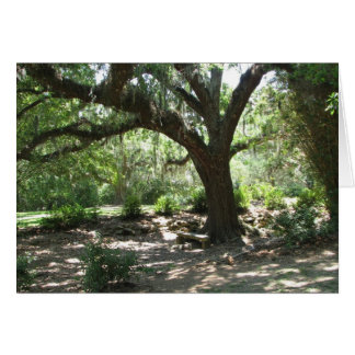 Avery Island moss covered tree Card