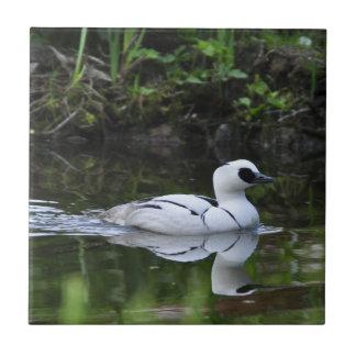 Aves acuáticas blancos y negros del pato de salto azulejo cuadrado pequeño