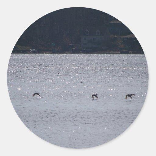 Aves acuáticas en vuelo pegatinas redondas