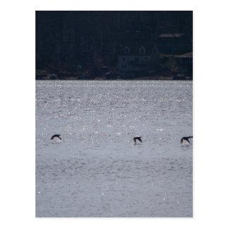 Aves acuáticas en vuelo postal
