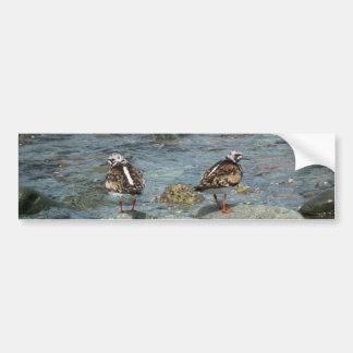 Aves costeras en la isla de Unalaska Pegatina De Parachoque
