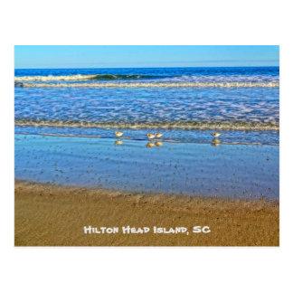Aves costeras en la playa Hilton Head de Marriott Postal
