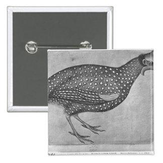 Aves de Guinea, el álbum de Vallardi Pin
